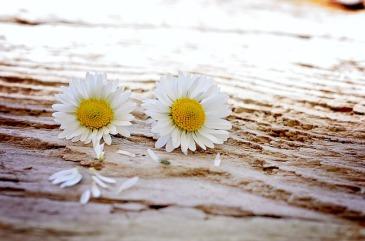 bloemen vida geluksmomenten
